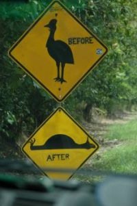 Watch out for Cassowary: Before and After