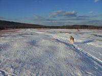 Maine blueberry field in light snow
