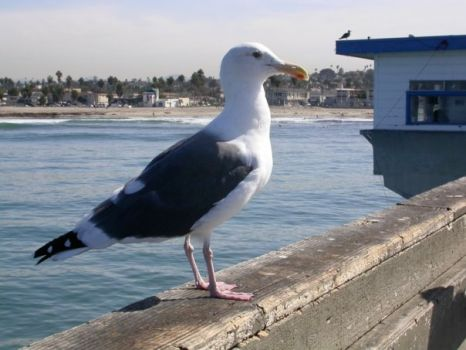 Jonathan Livingston Seagull: oops that dates me!