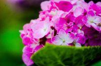 flower-54