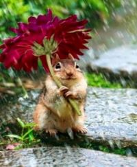 """This is my Umbrella"" says the Chipmunk"