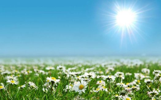 Slunce a kvítí