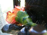 The Statue's Flower