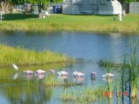 Pink Birds in Bonita Springs, FL 1