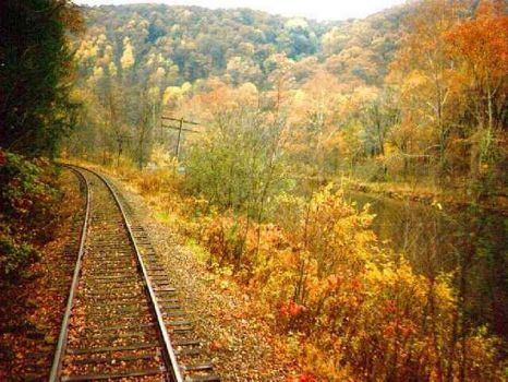 Tracks thru Fall trees