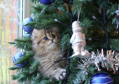 cute ornament