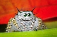 I don't like spiders, but this one is kinda cute...