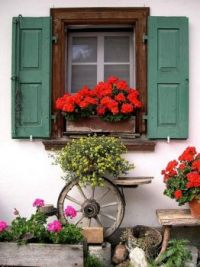 Window Box Display