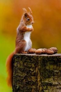 Squirrel & nuts...