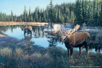 Now Showing-Moose by Jim Kasper