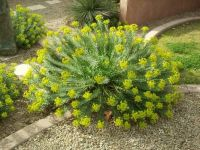 Beautiful desert plant