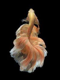 fishy 2