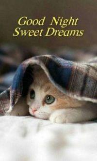 Good Night - Sweet Dreams!
