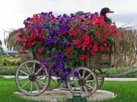 Flowers in a cart