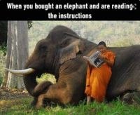 How to deal with an elephant