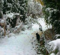 my garden today :-(