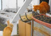 Foxy Meets Mr. Bunny