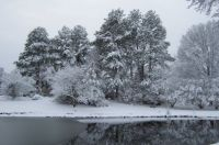 Winter Trees And Pond