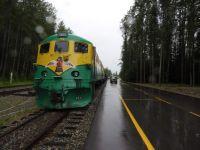 Rainy Yukon