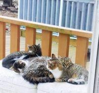 paul's cats