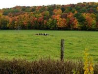 Fall in the Finger Lakes