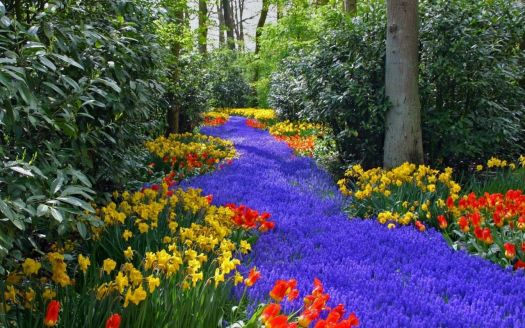 Blue-flowers-path