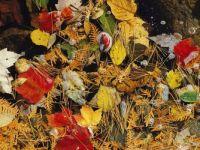 Autumn debris