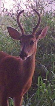 Buck 2014