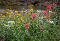 Indian Paintbrush and Other Wildflowers