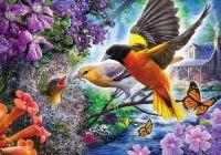 Birds Feeding The Chick