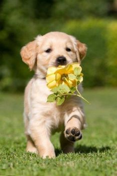 I founded a flower for you