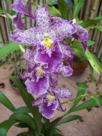 N. Orleans botanical garden by Martha M. (2)