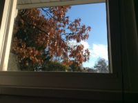 sitting at my computer looking outside on a beautiful Fall day
