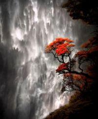 Red Tree Waterfall (Fun-Size)