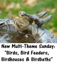 "New Multi-Theme Sunday:  ""Birds, Bird Feeders, Birdhouses & Birdbaths""   (I have several for this theme.)"