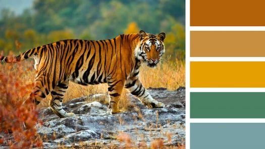 Tiger on a Walk