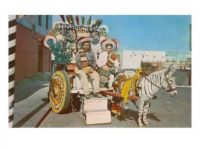 zebra-donkey-cart-tijuana-mexico