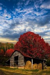 Winsome Barn In Autumn