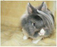 ~Cute Bunny~