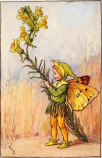 The Toadflax Fairy