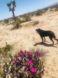 Lucy and the Joshua Tree