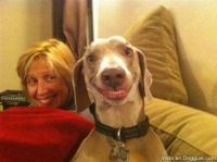 NO IDEA WHO THIS IS BUT I LOVE THE PIC OF THE DOG WITH HIS TEETH SMILING